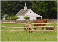 Do It Yourself Horse Barn Building kits from CountryCarpenters.com